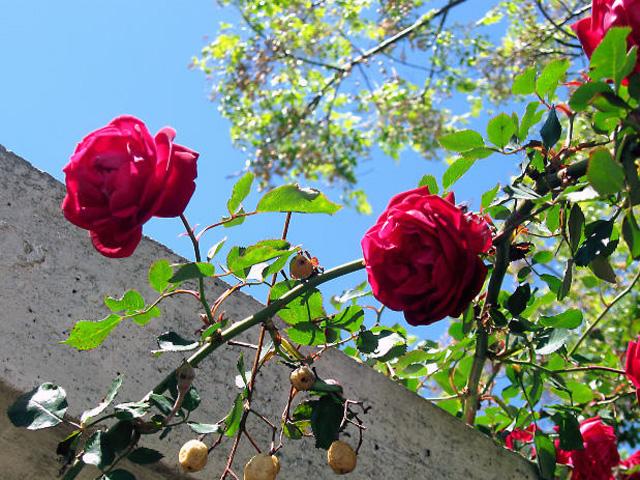 Struiken Met Bloemen Voor In De Tuin.De Beste Tips Voor Mooie Bloemen In De Tuin