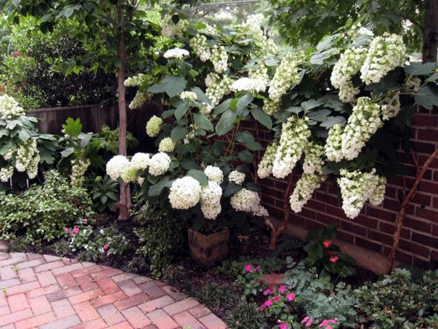 Struiken Met Bloemen Voor In De Tuin.Groen Blijvende En Bladverliezende Heesters Voor In De Tuin