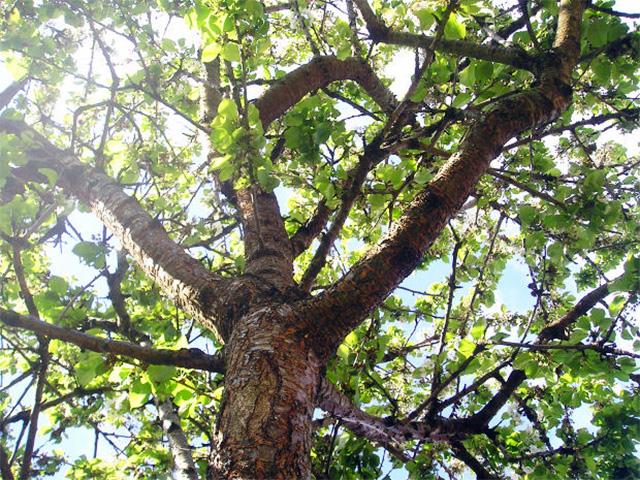 Beste Het kiezen van de juiste boom voor in de tuin QN-55